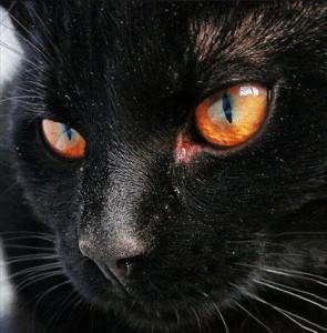 Саша Бест Кошка