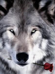 Волк Светлана Бондаренко
