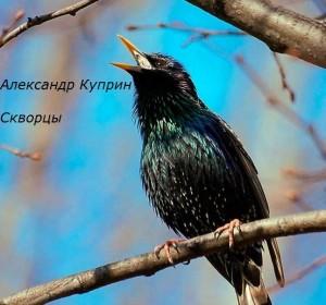 А. Куприн - Скворцы