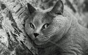 Татьяна Лернер. Вроде кот.